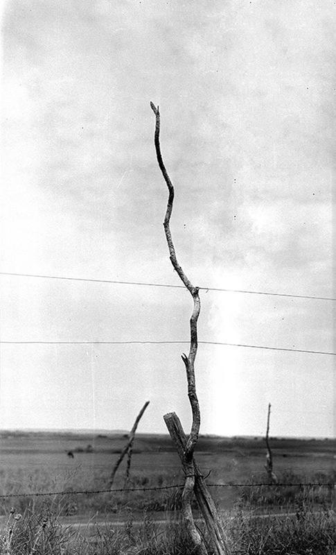 Early Telephone Pole (c. 1916)